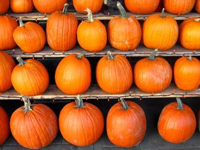 Pumpkin (culinate.com)
