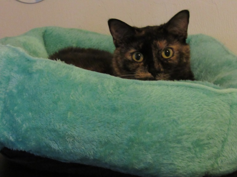 Stepfanie Lam - Cat Day (2)