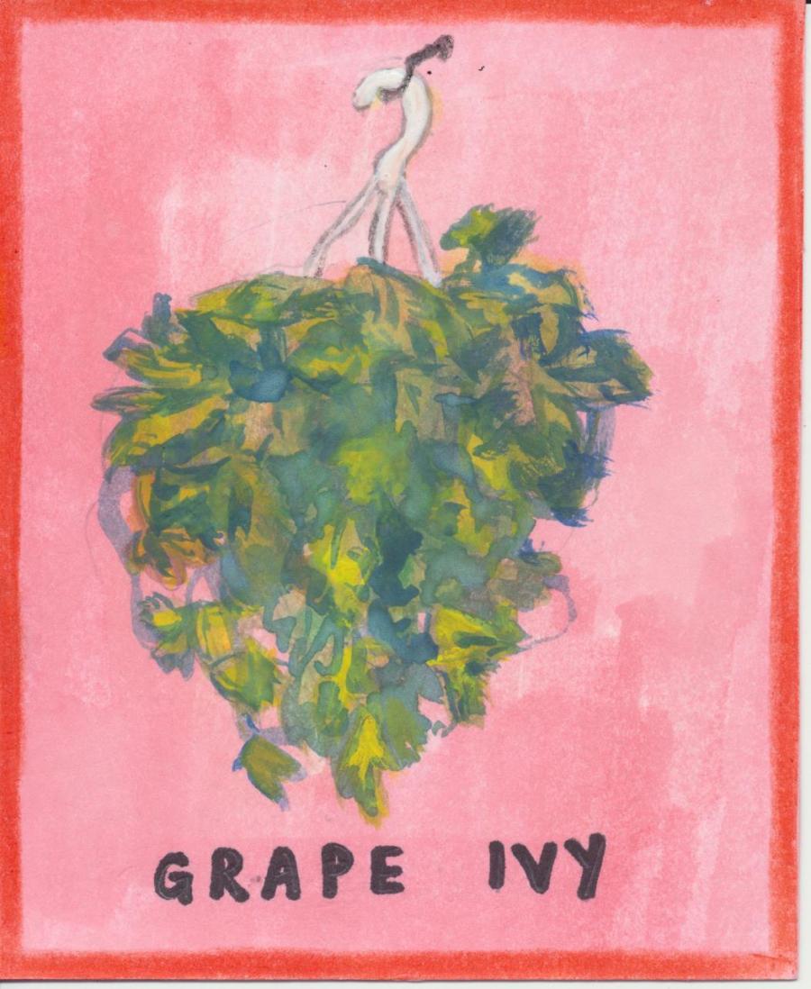 Grape ivy 001